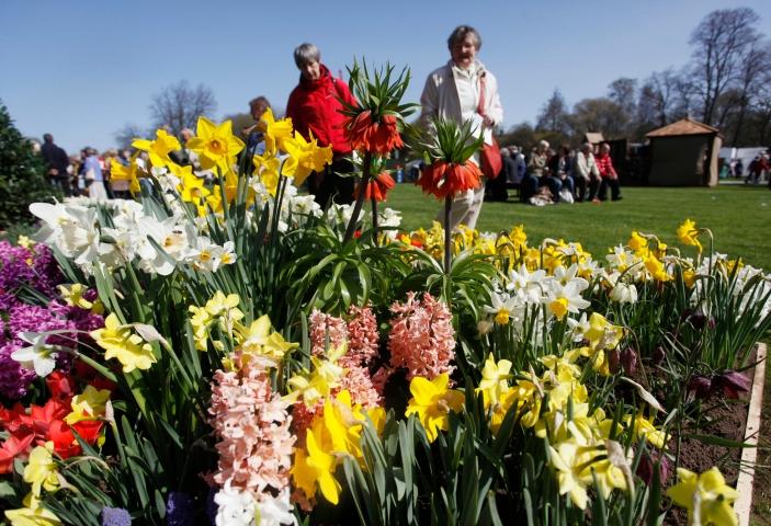 Daffodil display at the RHS Show Cardiff 2010.